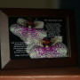 V1. Orchids Anniversary. Brown Frame
